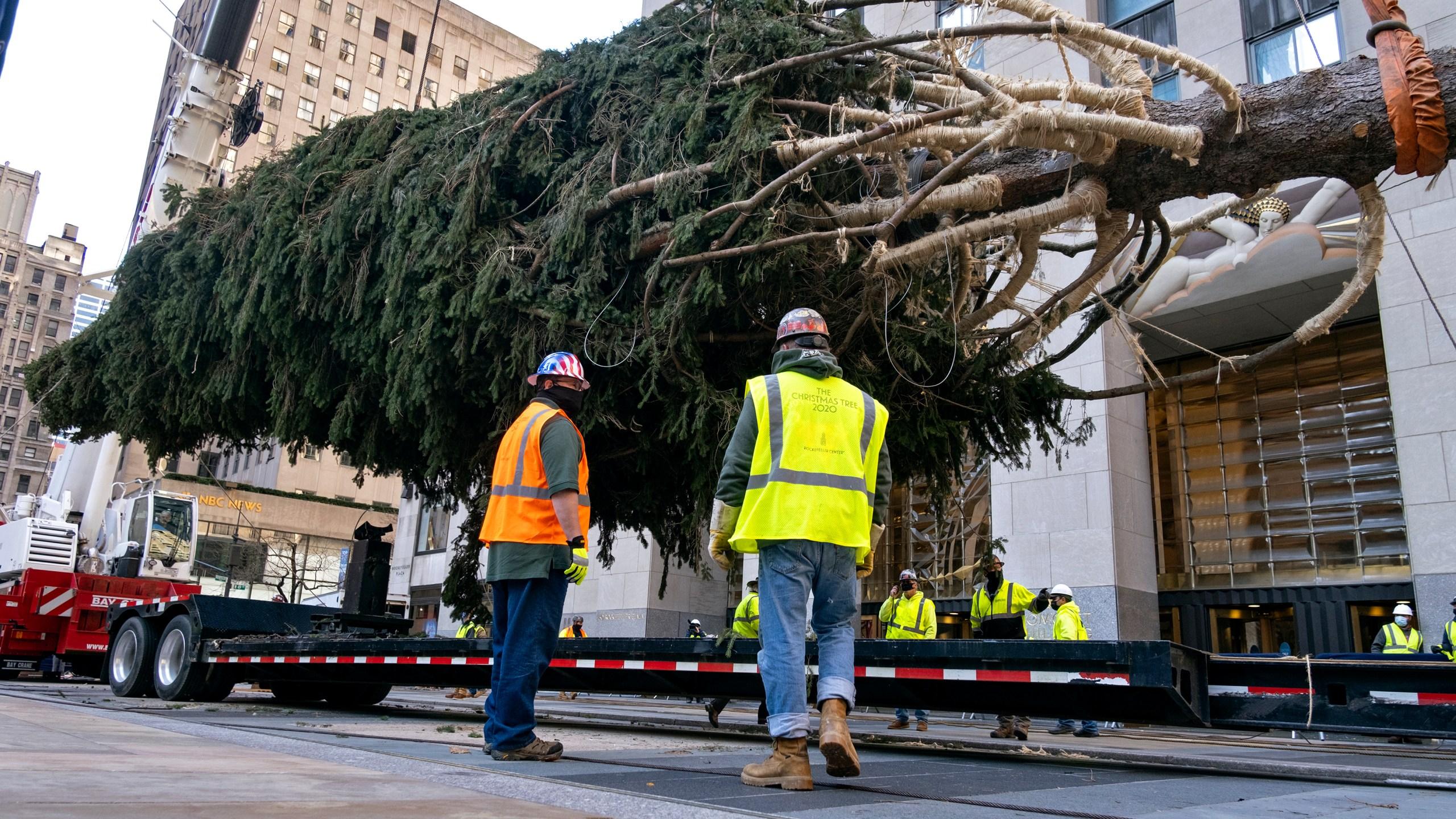 Christmas Assistance Dates For Green Bay Wisconsin 2020 Rockefeller Center Christmas tree arrives; lighting Dec. 2 | WFRV