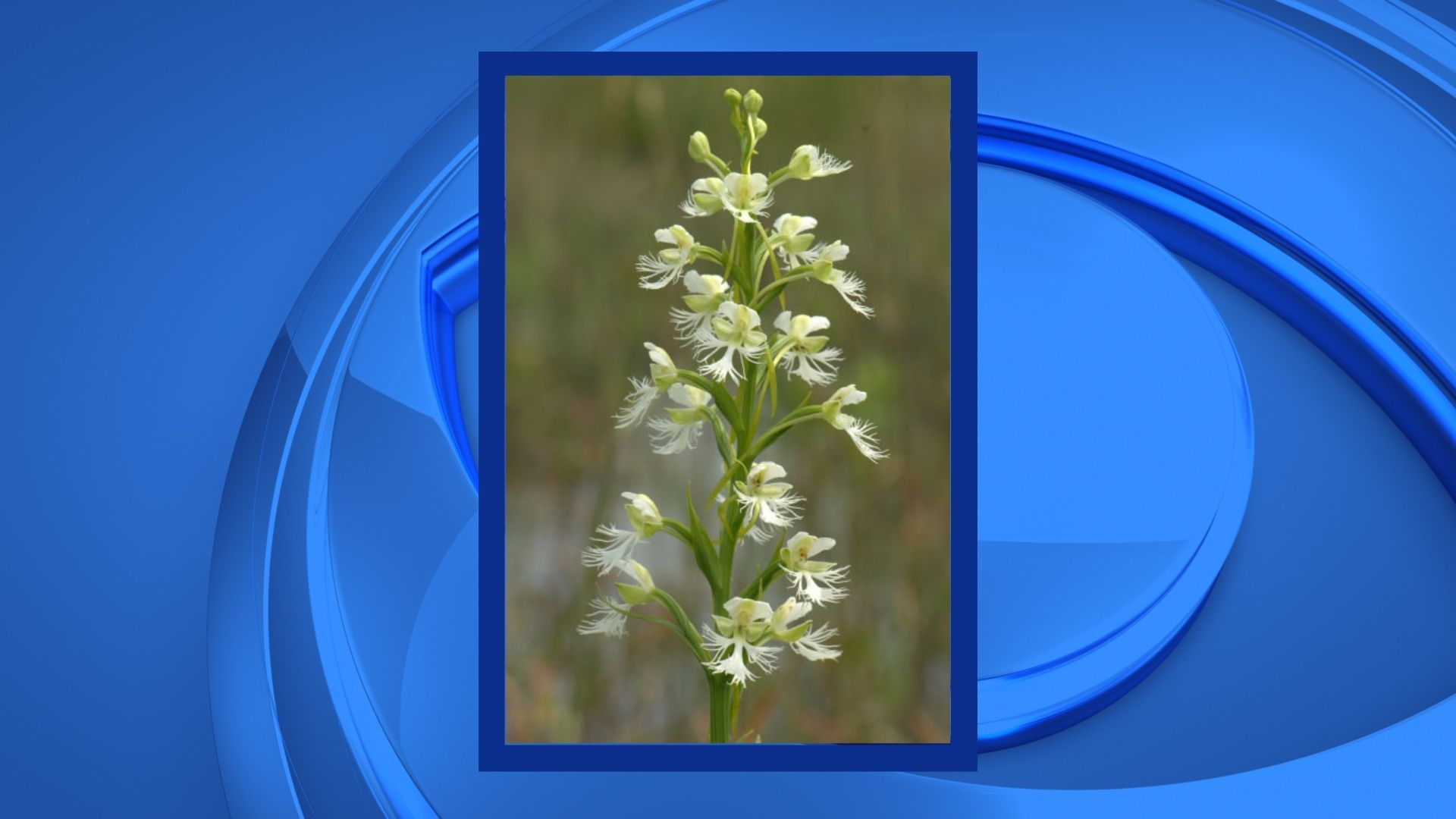 DNR discovers new populations of rare plants