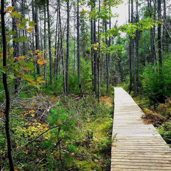 Conservancy group purchases 70K acres of northern Wisconsin forest